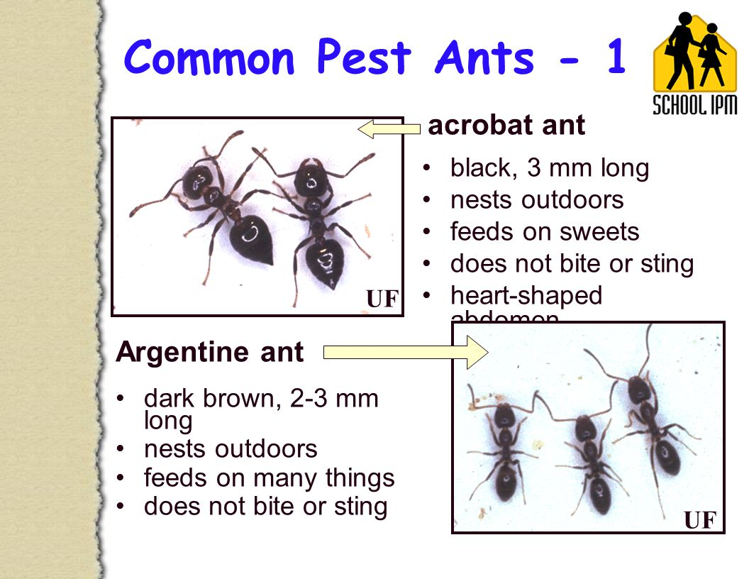 Common Pest Ants - 1 dark brown, 2-3 mm long nests outdoors feeds on many things does not bite or sting black, 3 mm long nests outdoors feeds on sweets does not bite or sting heart-shaped abdomen acrobat ant Argentine ant UF