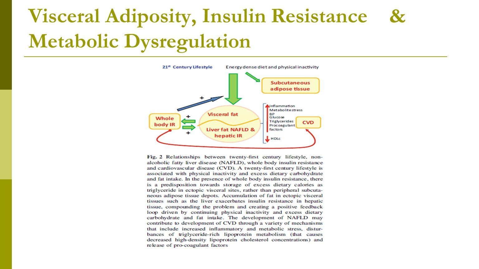 Visceral Adiposity, Insulin Resistance & Metabolic Dysregulation