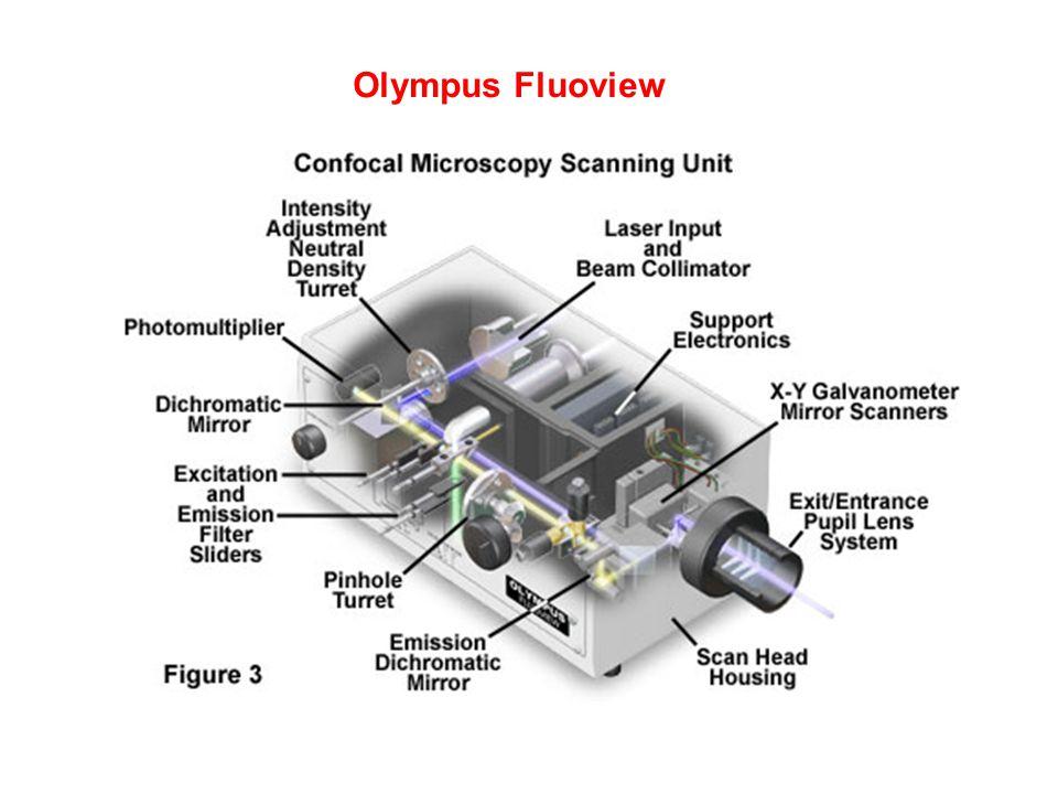 Olympus Fluoview