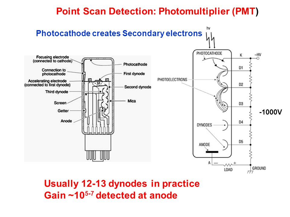 Point Scan Detection: Photomultiplier (PMT) Usually 12-13 dynodes in practice Gain ~10 5-7 detected at anode Photocathode creates Secondary electrons -1000V