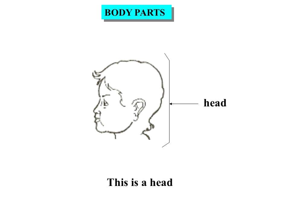 I use my ear to hear. ear USE OF BODY PARTS HEAR