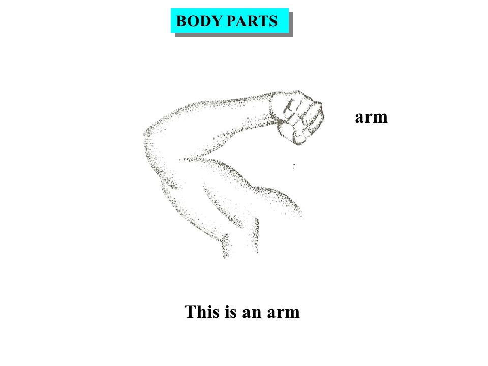 arm This is an arm BODY PARTS