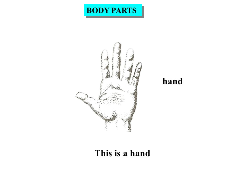 hand This is a hand BODY PARTS