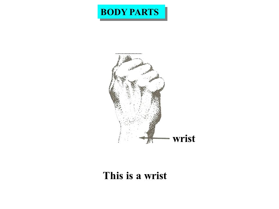 wrist This is a wrist BODY PARTS