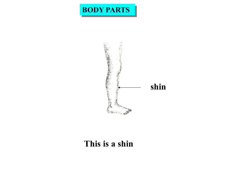 shin This is a shin BODY PARTS