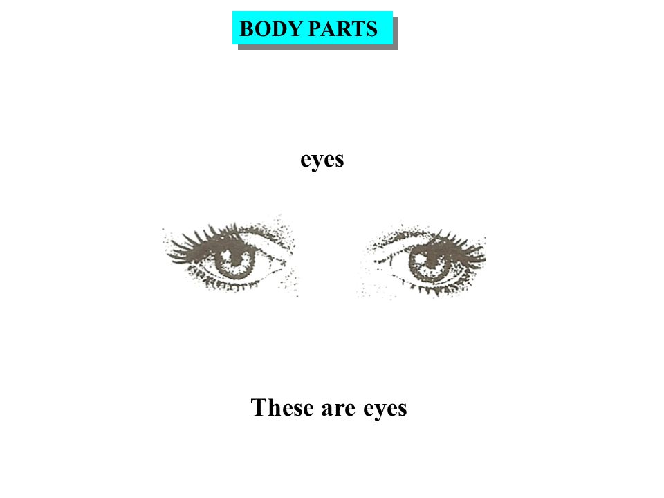 eyebrows These are eyebrows BODY PARTS