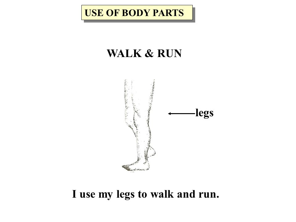 I use my legs to walk and run. legs USE OF BODY PARTS WALK & RUN
