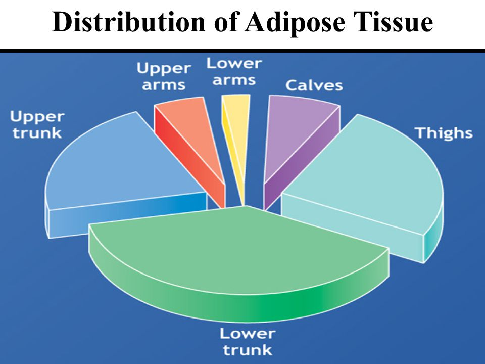 Chapter 610 Distribution of Adipose Tissue