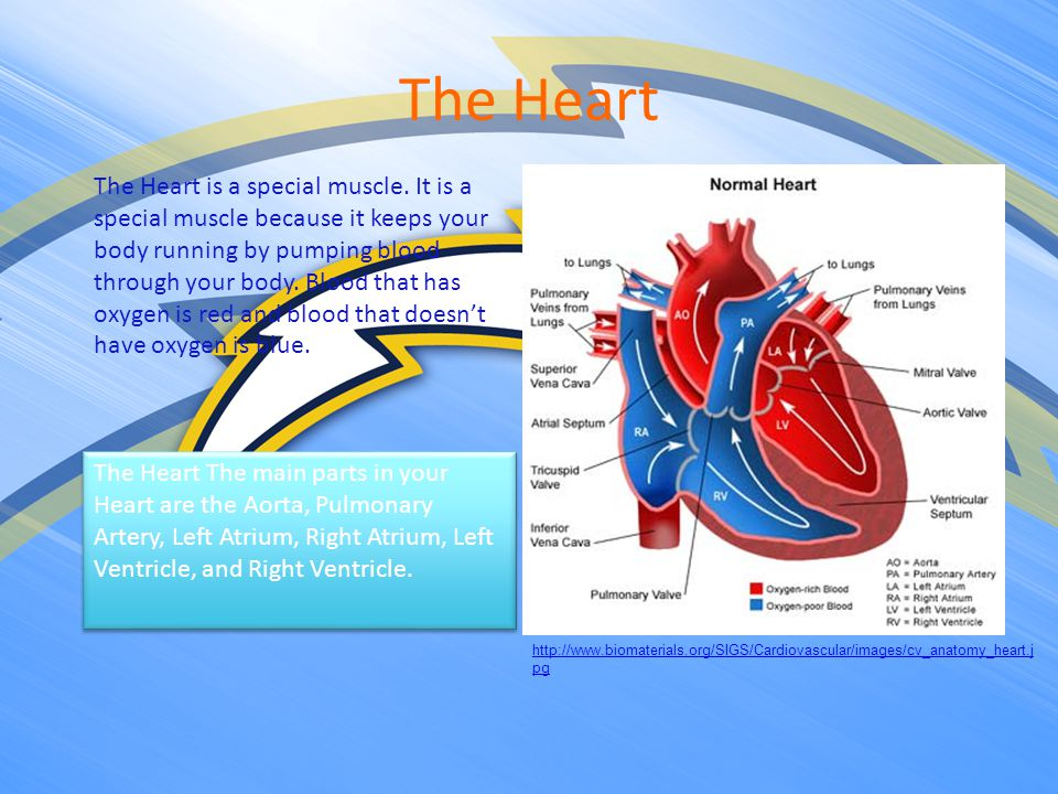 The Respiratory System http://www.fashion-res.com/EX/10-08- 06/RespiratorySystem1.jpg Your Respiratory is made up of your Mouth, Nasopharynx, Trachea, Lungs, Diaphragm, and Bronchial Tree which gives oxygen to your Lungs.