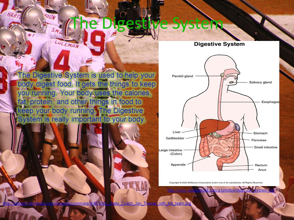http://www.chabotcollege.edu/pe/Pictures/baseball2.jpg http://www.oldandsold.com/a1photos/muscular_system.jpg The Nervous System The Nervous System is important to your body because it tells you when you are hurt.
