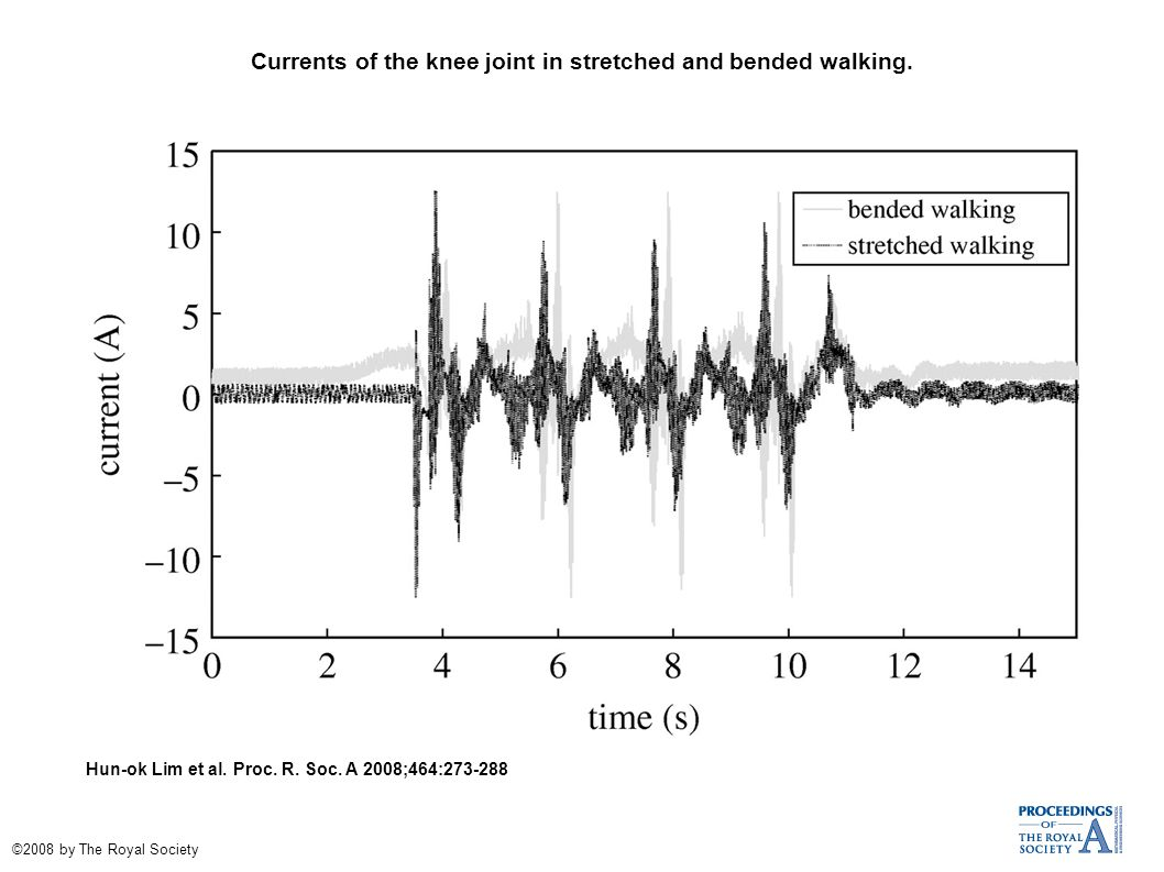 Currents of the knee joint in stretched and bended walking.