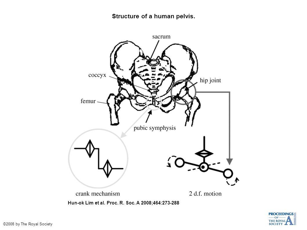 Structure of a human pelvis. Hun-ok Lim et al. Proc. R. Soc. A 2008;464:273-288 ©2008 by The Royal Society