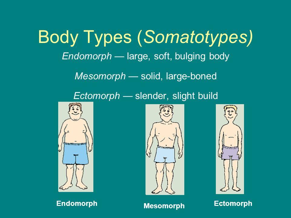 Body Types (Somatotypes) Endomorph — large, soft, bulging body Mesomorph — solid, large-boned Ectomorph — slender, slight build Endomorph Mesomorph Ec