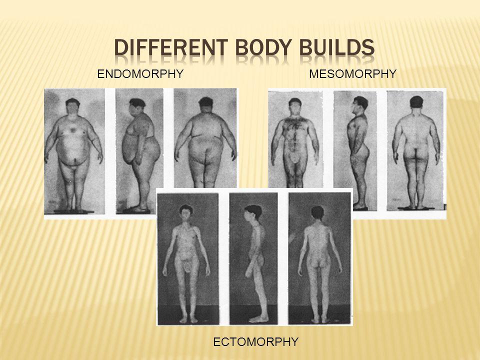 ENDOMORPHYMESOMORPHY ECTOMORPHY