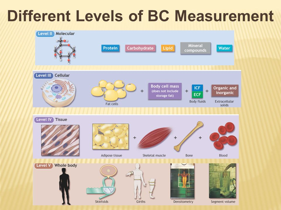  Based on the principle that approximately half of the body's fatty tissue is directly beneath skin  Reliable measurements of this tissue give a good indication of percent body fat  Skinfold test is done with pressure calipers  Several sites are measured and percent fat is estimated from the sum of the three sites using  All measurements should be taken on the right side of the body