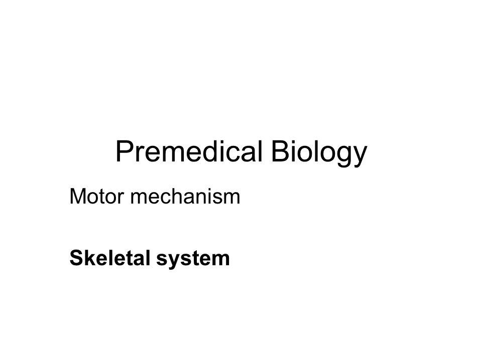 Premedical Biology Motor mechanism Skeletal system