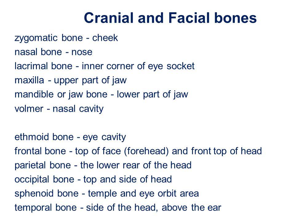 zygomatic bone - cheek nasal bone - nose lacrimal bone - inner corner of eye socket maxilla - upper part of jaw mandible or jaw bone - lower part of j