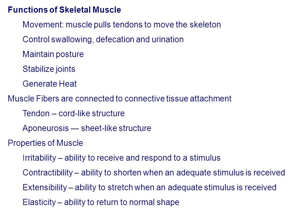 Functions of Skeletal Muscle Movement: muscle pulls tendons to move the skeleton Control swallowing, defecation and urination Maintain posture Stabili