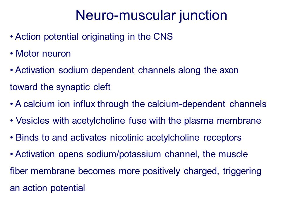 Action potential originating in the CNS Motor neuron Activation sodium dependent channels along the axon toward the synaptic cleft A calcium ion influ