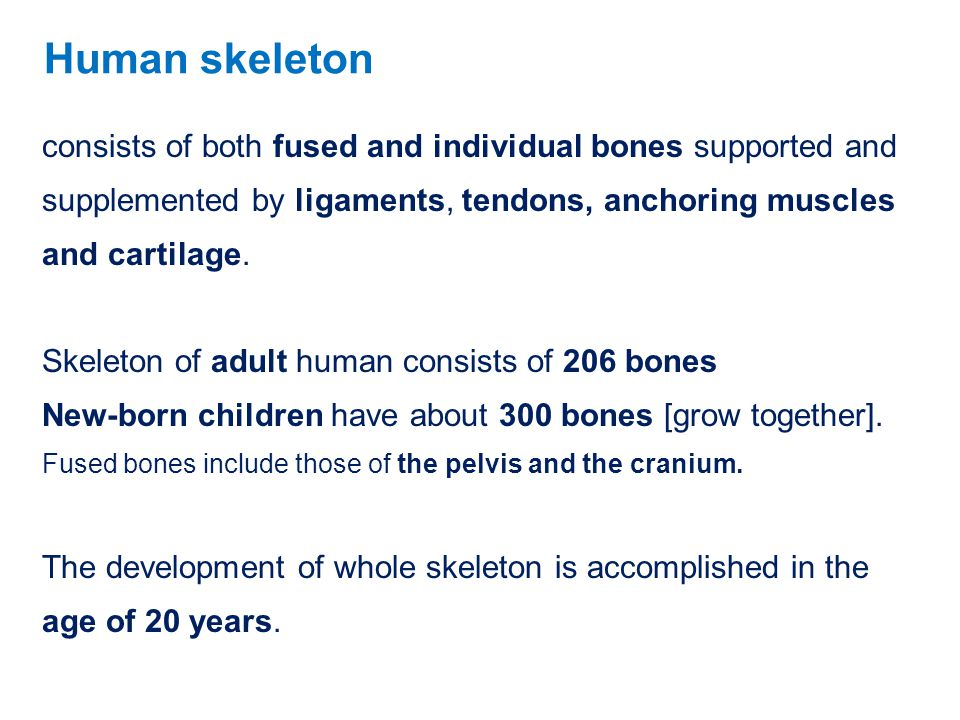 consists of both fused and individual bones supported and supplemented by ligaments, tendons, anchoring muscles and cartilage. Skeleton of adult human