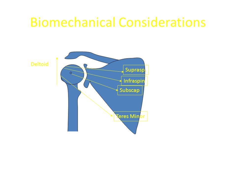 Biomechanical Considerations Suprasp. Infraspin Subscap Teres Minor Deltoid