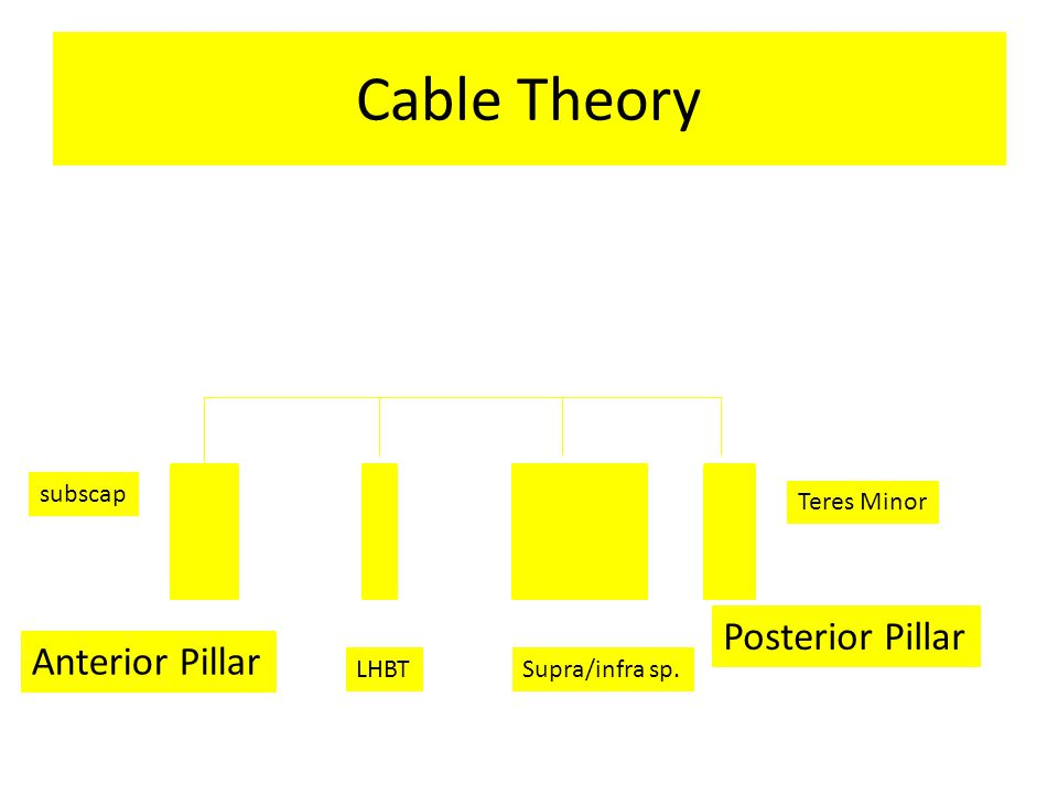 Cable Theory Anterior Pillar Posterior Pillar subscap LHBTSupra/infra sp. Teres Minor