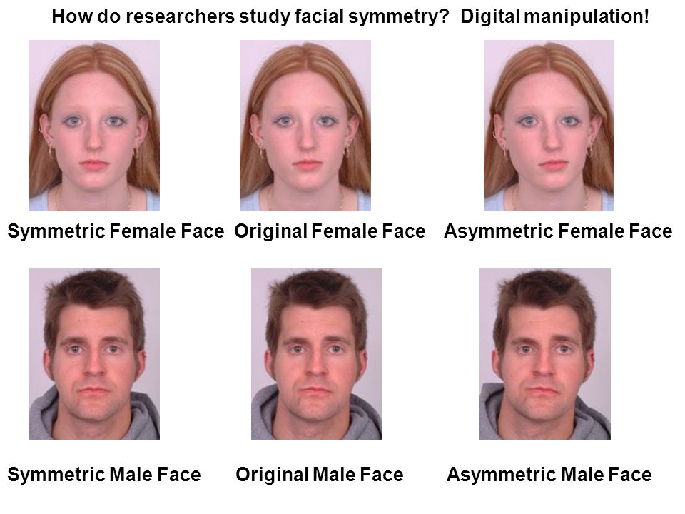 Composite of 60 Faces Composite of 15 Most Attractive Faces Hyper-Attractive Composite Facial attractiveness researchers also create composite faces