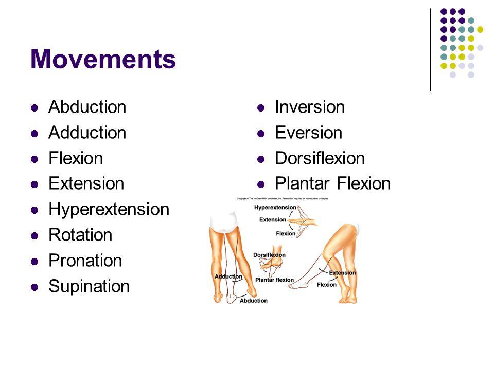 Movements Abduction Adduction Flexion Extension Hyperextension Rotation Pronation Supination Inversion Eversion Dorsiflexion Plantar Flexion
