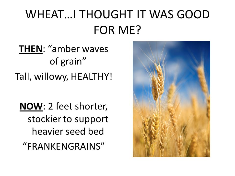 WHEAT…I THOUGHT IT WAS GOOD FOR ME.THEN: amber waves of grain Tall, willowy, HEALTHY.