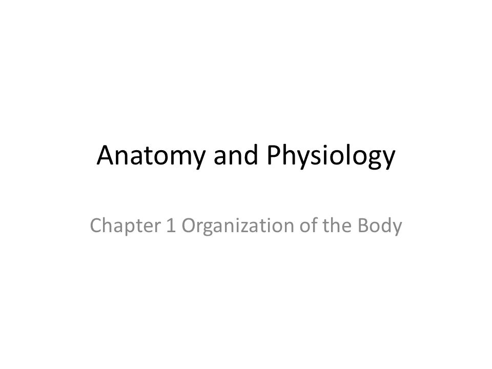 Anatomy and Physiology Chapter 1 Organization of the Body