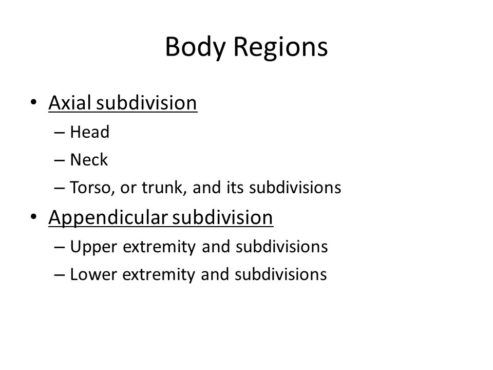 Body Regions Axial subdivision – Head – Neck – Torso, or trunk, and its subdivisions Appendicular subdivision – Upper extremity and subdivisions – Lower extremity and subdivisions