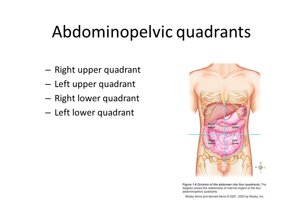 Abdominopelvic quadrants – Right upper quadrant – Left upper quadrant – Right lower quadrant – Left lower quadrant