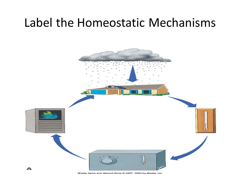 Label the Homeostatic Mechanisms