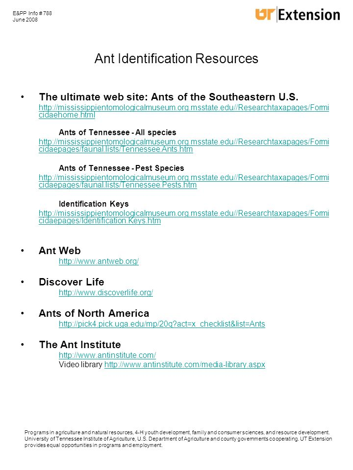 Ant Identification Resources The ultimate web site: Ants of the Southeastern U.S.