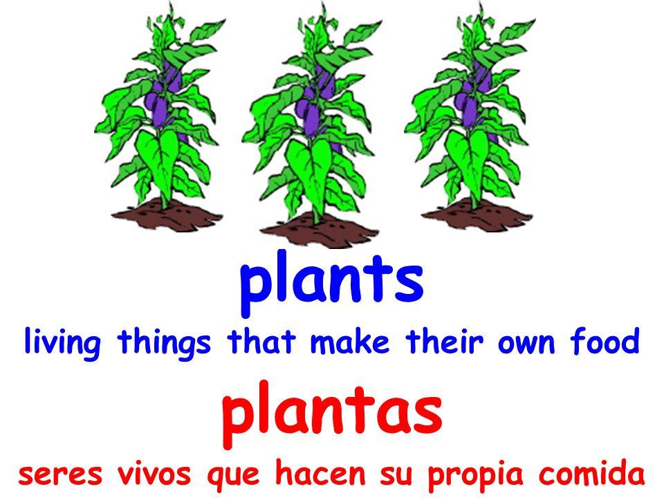 plants living things that make their own food plantas seres vivos que hacen su propia comida