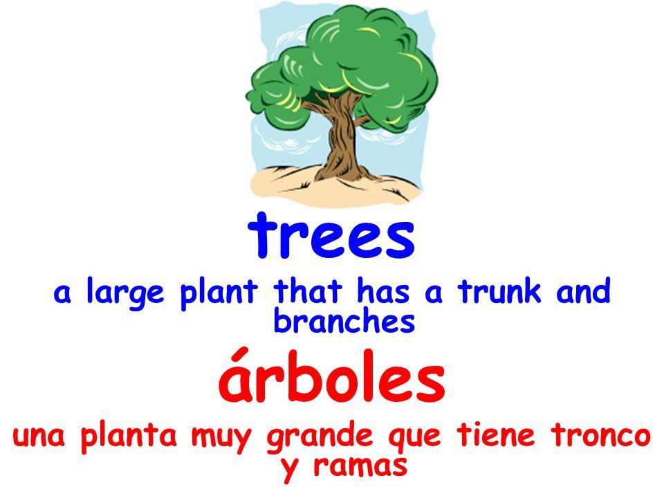 trees a large plant that has a trunk and branches árboles una planta muy grande que tiene tronco y ramas