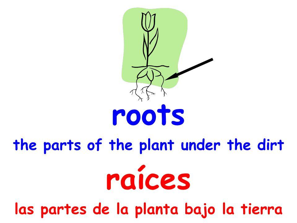 roots the parts of the plant under the dirt raíces las partes de la planta bajo la tierra