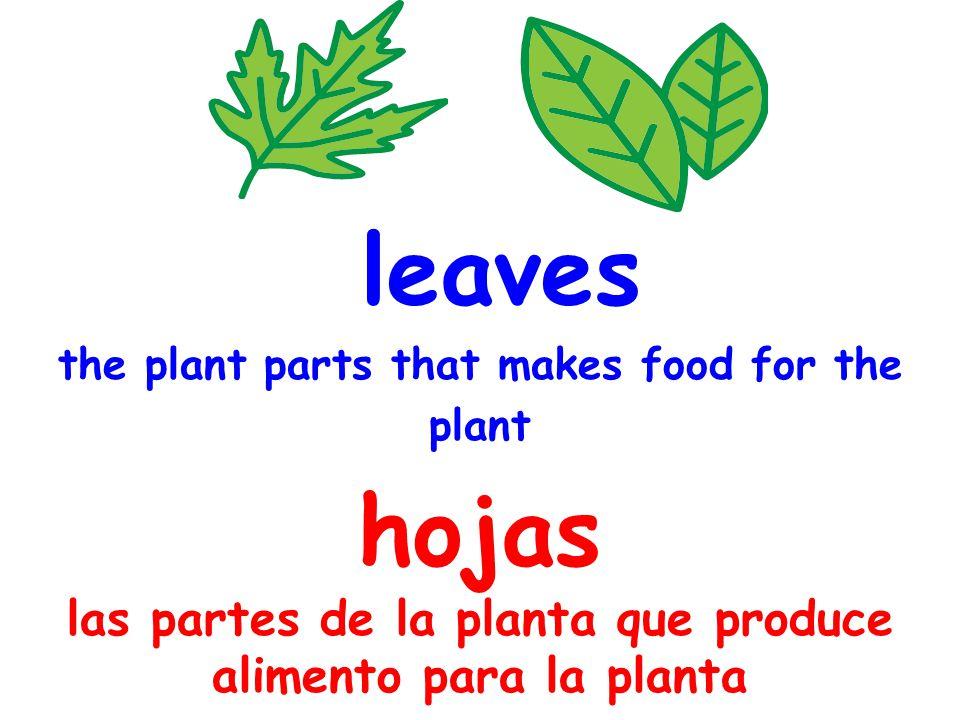 leaves the plant parts that makes food for the plant hojas las partes de la planta que produce alimento para la planta