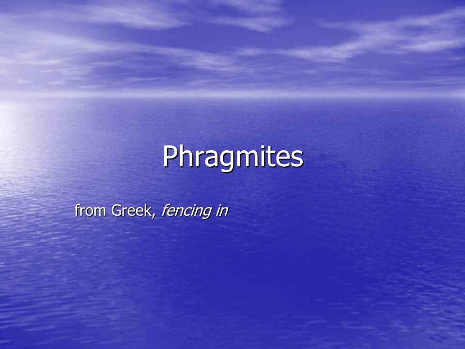 Phragmites from Greek, fencing in from Greek, fencing in