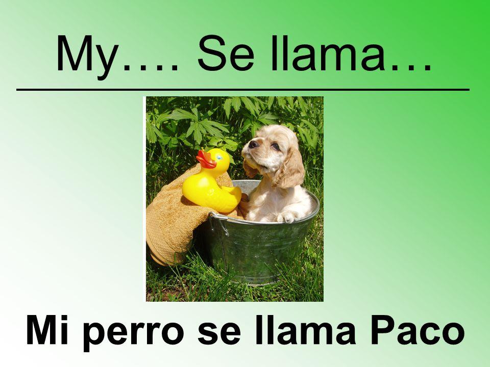 Mi perro se llama Paco My…. Se llama…