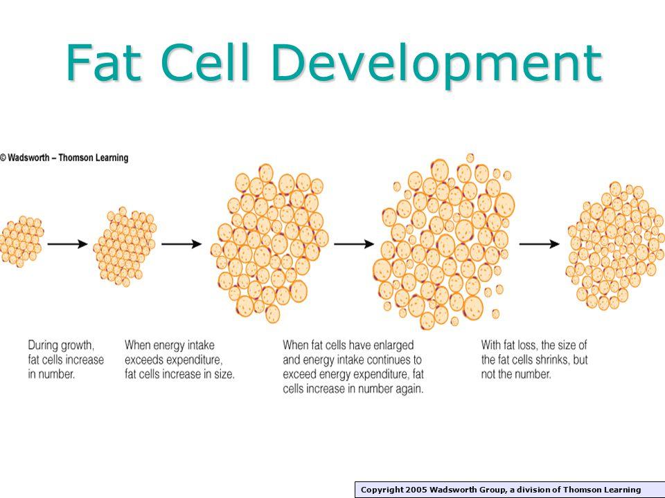 Why Treat Obesity.