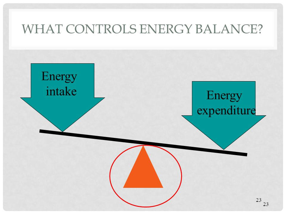 WHAT CONTROLS ENERGY BALANCE? 23 Energy intake Energy expenditure