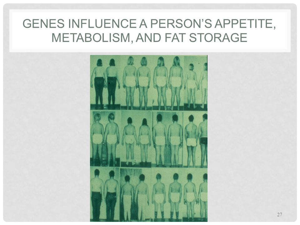 GENES INFLUENCE A PERSON'S APPETITE, METABOLISM, AND FAT STORAGE 27