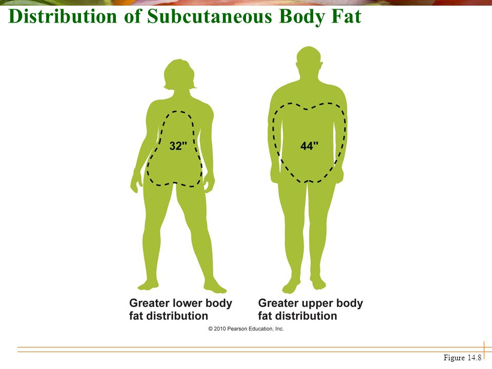 Figure 14.8 Distribution of Subcutaneous Body Fat