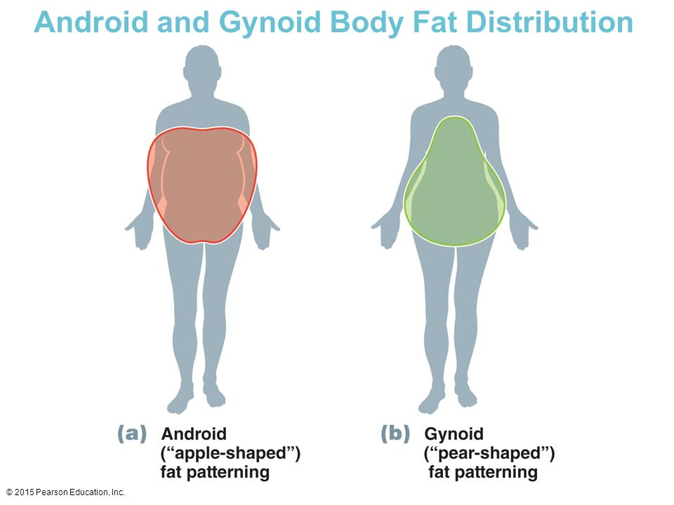 Android and Gynoid Body Fat Distribution © 2015 Pearson Education, Inc.
