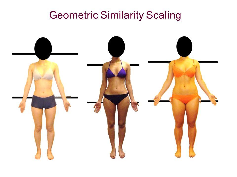 Geometric Similarity Scaling