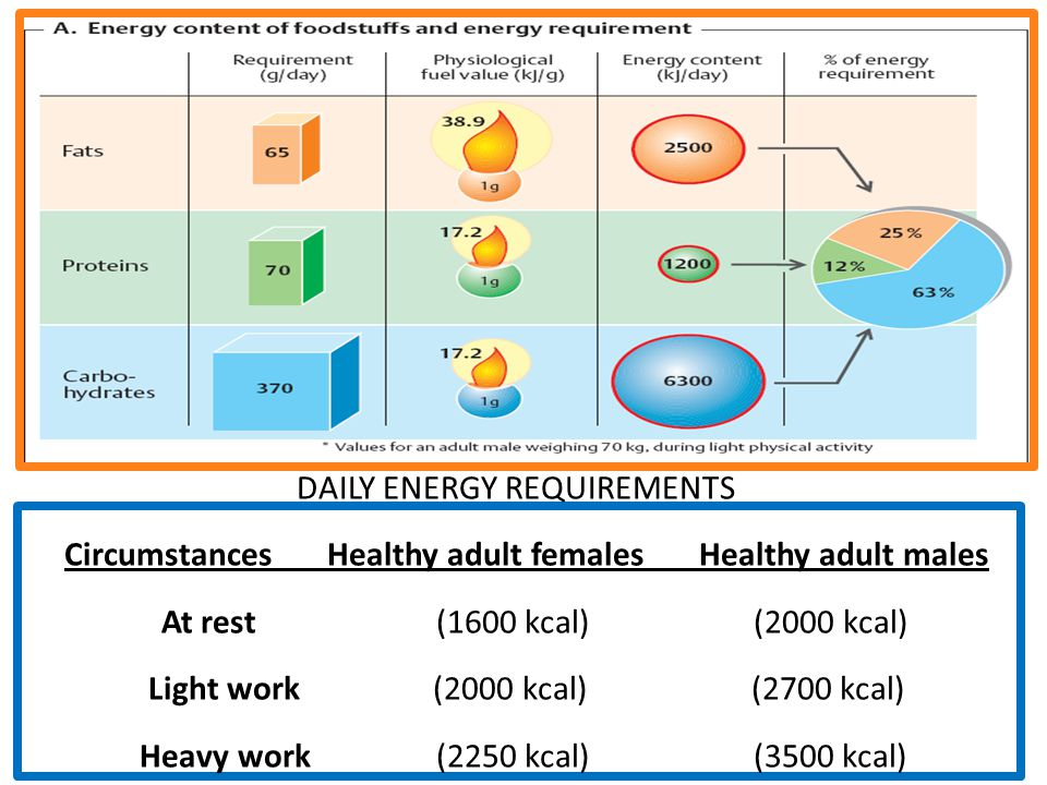 DAILY ENERGY REQUIREMENTS Circumstances Healthy adult females Healthy adult males At rest (1600 kcal) (2000 kcal) Light work (2000 kcal) (2700 kcal) H