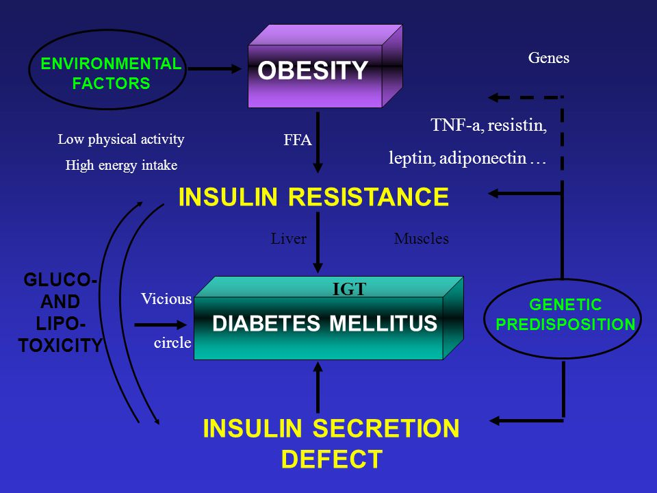 OBESITY DIABETES MELLITUS INSULIN RESISTANCE INSULIN SECRETION DEFECT GENETIC PREDISPOSITION ENVIRONMENTAL FACTORS GLUCO- AND LIPO- TOXICITY Low physical activity High energy intake Genes Vicious circle IGT FFA TNF-a, resistin, leptin, adiponectin … LiverMuscles