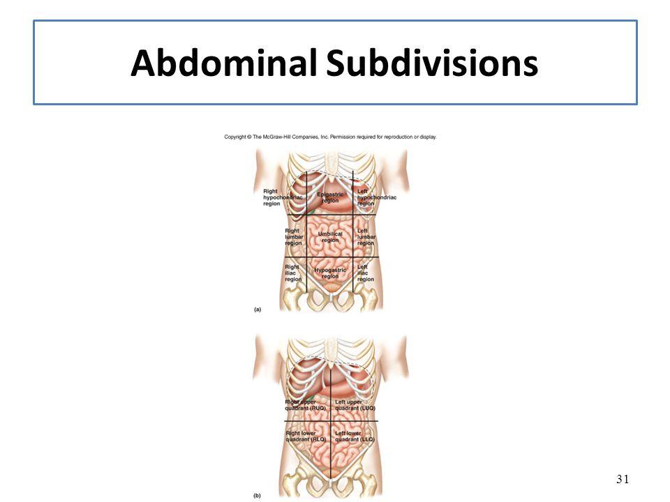 31 Abdominal Subdivisions