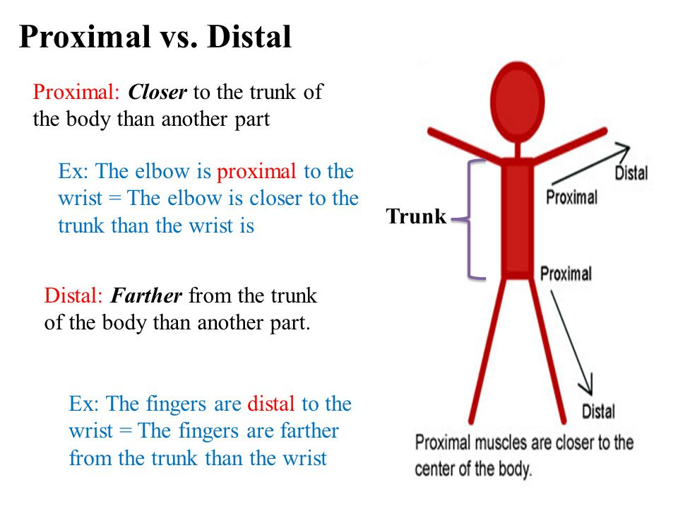 8 Proximal: Closer to the trunk of the body than another part Ex: The elbow is proximal to the wrist = The elbow is closer to the trunk than the wrist